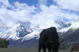 De overland naar Tibet - Pasho naar Pome