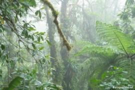 In de wolken in Santa Elena