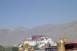 Weekje Lhasa