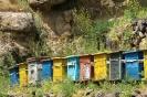 Gerhard klooster - Kleurige bijenkorven