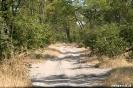 Moremi Nationaal Park