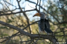Khama Rhino Sanctuary - Neushoornvogel