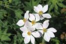 Kazbegi - Kleurige<br />bloemetjes