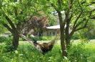 Mestia - Schommelen bij het guesthouse