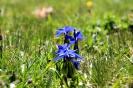 Ushguli - Prachtige<br />bloempjes in de wei
