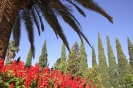 Shiraz - Eram tuinen