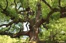 Kyoto - Grote bomen!
