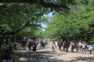 Tokyo - Ueno park