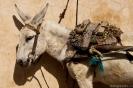 Marrakech - Wachten op werk