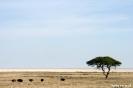 Etosha - Struisvogels voor de zoutvlakte