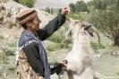 Wakhan vallei - Geit kan een kunstje!