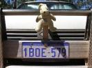 QLD - Onze mascotte<br />op de roobar