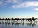 WA - Broome, kamelen in het avondlicht