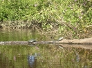 Pampastrip -<br />Schildpadjes