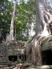 Ankor Wat - Jungle temple