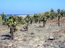 Galapagos -<br />Cactusplanten