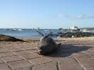 Galapagos - Zeeleeuwen in de haven van San Christobal