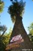 El Bolson - trekking<br />naar refugio Hielo<br />Azul - hoge bomen!
