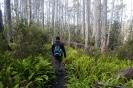 Mount Field - wandelen door het bos