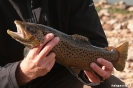 Grampians - Forel uit Lake Wartook