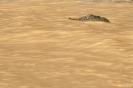 Kinabatangan - Krokodil