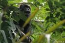 Pantanal - brulaap