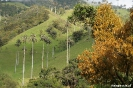 Salento - Vallee de Cocora