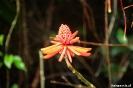 Torteguero - alweer een mooie bloem!