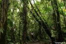 Volcan Arenal - Prachtig regenwoud