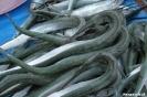 Bacolot - merkwaardige vissen