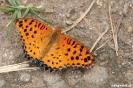 Maligcong, vlindertje