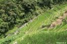 Rijstterrassen van Batad