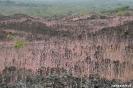 Masaya vulkaan, fraaie begroeing tussen de lava