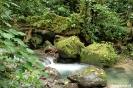 El Valle - beekje in regenwoud