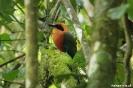 El Valle - Fraaie vogel