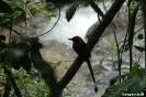 El Valle - Zelfde vogel, let op staart