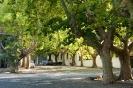 Colonia - straatje met bomen